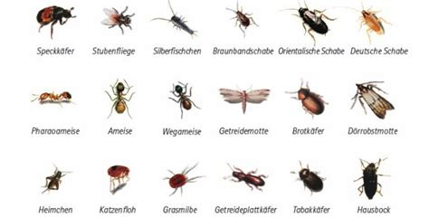 Insekten Im Haushalt 4051 insekten im haushalt silberfischfallen ungeziefer im haus