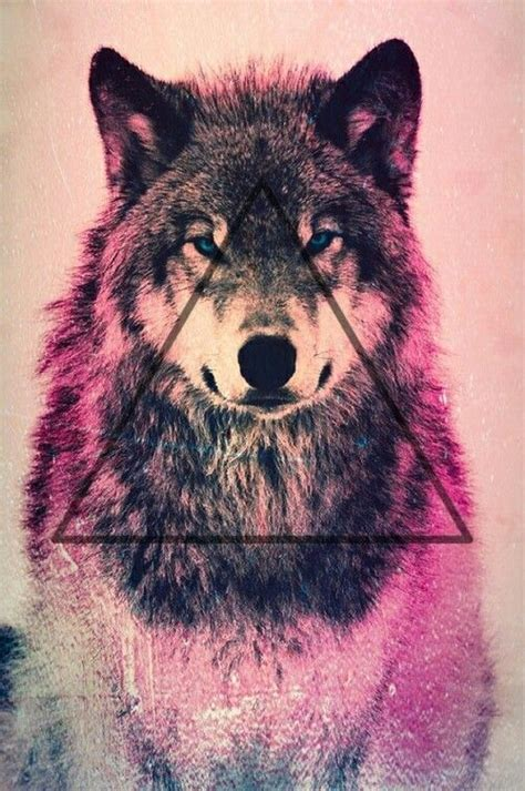 wallpaper iphone wolf i just lost a follower i had 6 followers now i have 5