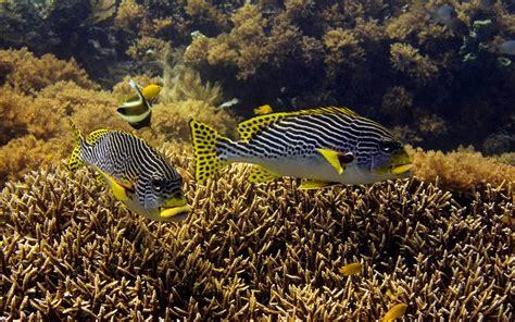 wallpapers for desktop photos wallpapers ocean life wallpapers