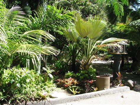 Palm Gardens palm gardens part 2
