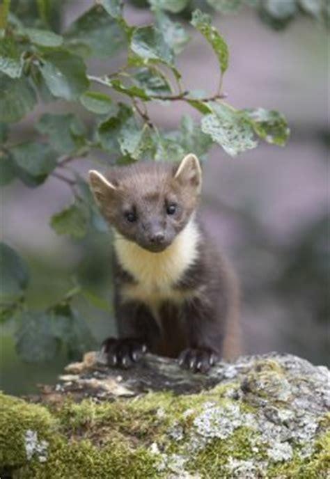 wildlife paparazzi descend on scottish highlands to