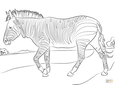 zebra coloring page mountain zebra coloring page free printable coloring pages
