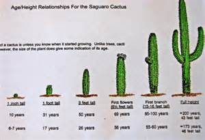 succulent facts structured water and air photo gallery structured water