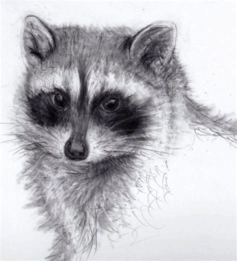 Animal Pencil the 25 best pencil drawings of animals ideas on