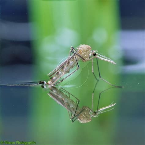 how to kill mosquito in bedroom how to keep mosquitoes out of house 28 images how to
