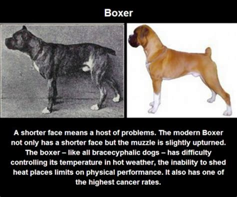 types of purebred dogs what years of selective did to purebred dogs is