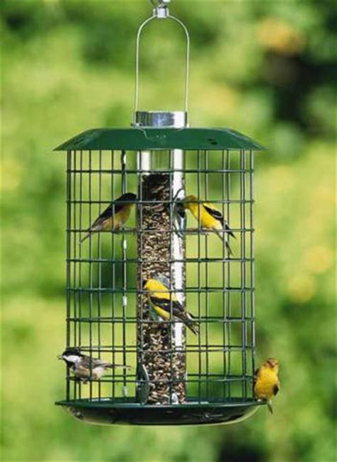 Small Bird Feeders 5 Bird Feeders That Will Attract A Variety Of Birds