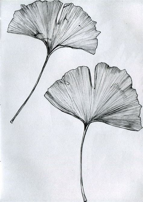 ginkgo leaf tattoo ginkgo tree it