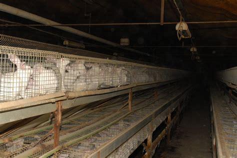 gabbie per conigli da carne conigli essere animali diverse specie un pianeta