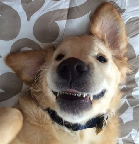 puppies buzzfeed a puppy with braces is breaking hearts on the