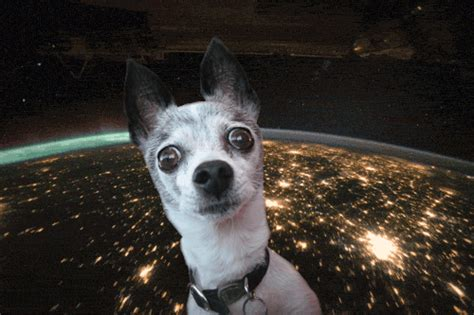 dogs in space in space or something