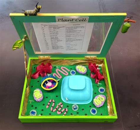 3d plant cell diagram project designed by youth pollicita middle school animal and