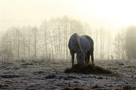 alimentazione per cavalli alimentazione invernale per cavalli no problem cortal