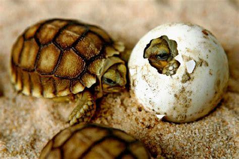 imagenes de animales oviparos viviparos y ovoviviparos animales ov 237 paros animales omn 237 voros