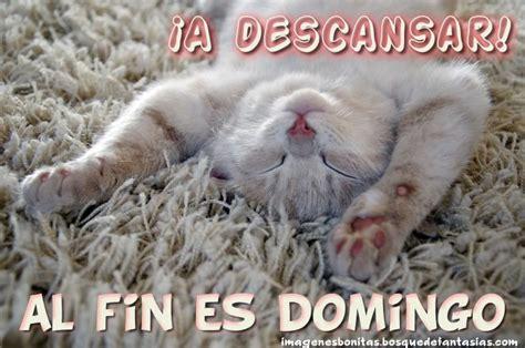 imagenes feliz domingo con gatos im 193 genes de feliz domingo 174 amor amigos y familia