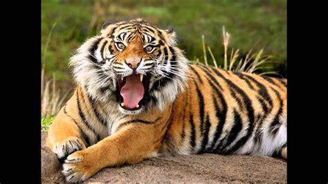 imagenes de animales salvajes animales salvajes y domesticos youtube