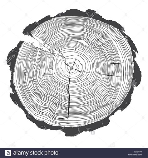 tree cross section annual tree growth rings with grayscale drawing of the