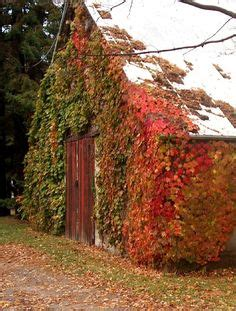 Autumn Bliss Romancing Wisconsin 5 autumn splendor on autumn leaves fall leaves