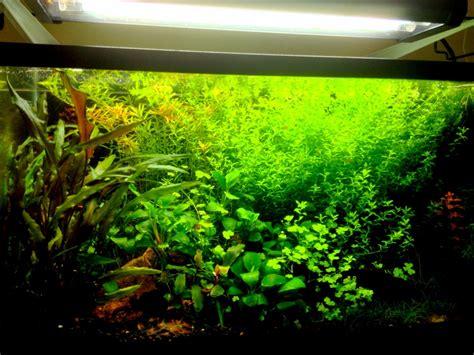 10 gallon tank aquascaping page 10 carolina fish talk