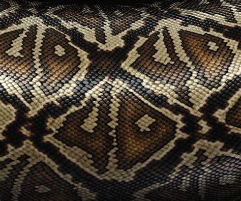 snake print predator and prey snake print