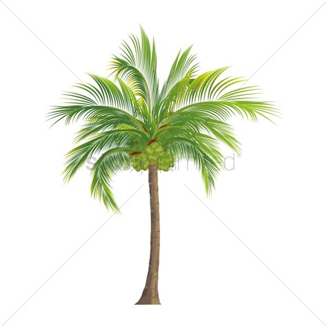 Coconut Tree coconut tree vector png www pixshark images