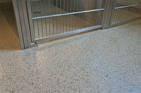 top five reasons why epoxy floors are the right choice for veterinary clinics animal
