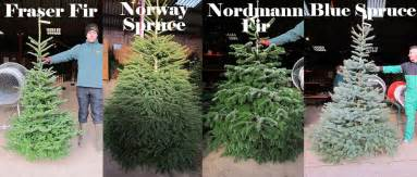 trees types oakberry christmas tree varieties