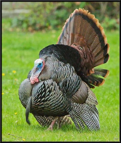 www large large birds
