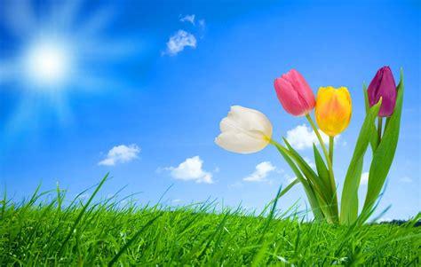 imagenes de paisajes florales fondo pantalla flores fantasia tablero de sophia