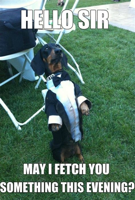 Funny Dachshund Memes - meme 2014 waiter dog meme lol furry people pinterest
