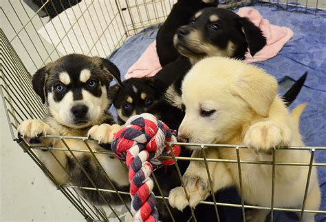 facts about puppy mills 6 puppy mills facts that every lover should dogsarena