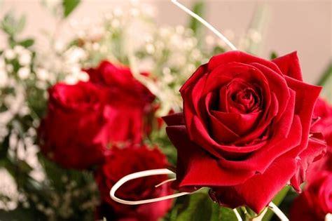 fiori per un compleanno fiori per compleanno ad ognuno il suo fiore di buon