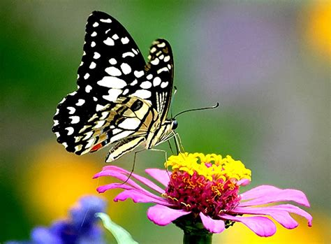 Vas Bunga Sangkar Kupu Kupu 1 butterfly n flower a photo from jawa barat java trekearth