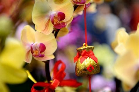 new year flower market 2016 new year what to do in hong kong