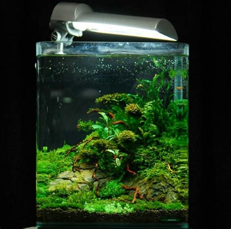 Lu Aquarium Ikan aquarium yg bergerak gallery foto aquascape mini ferboes