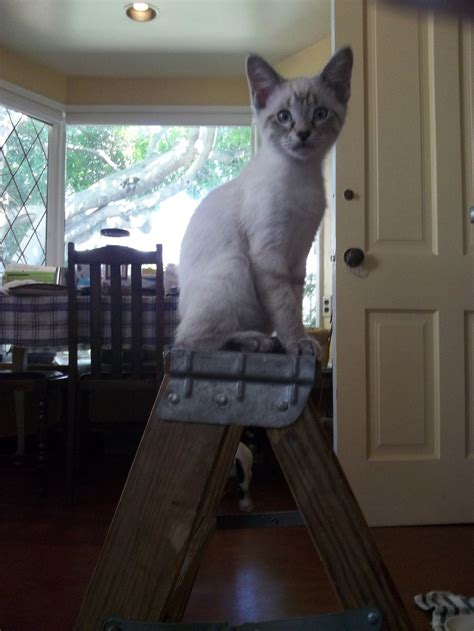 Cat With Stool by Step Stool Cat By Earthvsthederek On Deviantart