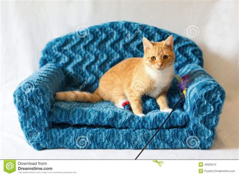 couch for cats couch kitty stock photo image 45925212