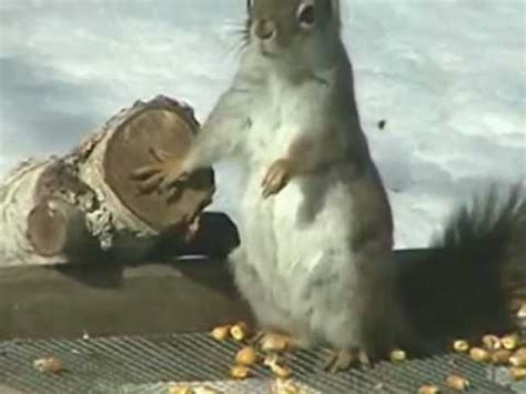 dramatic squirrel is back youtube