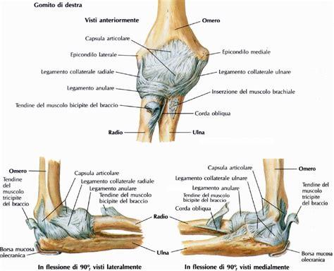 legamento collaterale interno articolazione omero radiale tfw strength and conditioning