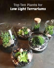 Diy Hanging Plant Pot top ten low light terrarium plants pistils nursery