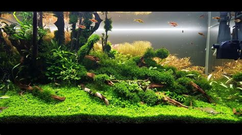 aquascape maintenance ada 90p aquascape quot running up that hill quot maintenance day