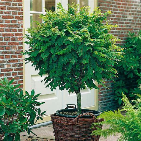 Garten Und Landschaftsbau Döbeln by Langsam Wachsende Pflanzen Maik Rohdich Garten Und