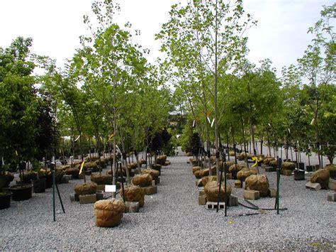 gumpf gardens 1 800 298 4001 landscaping garden