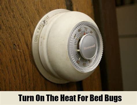 does heat kill bed bugs 12 herbal remedies for bed bugs how to cure bed bugs