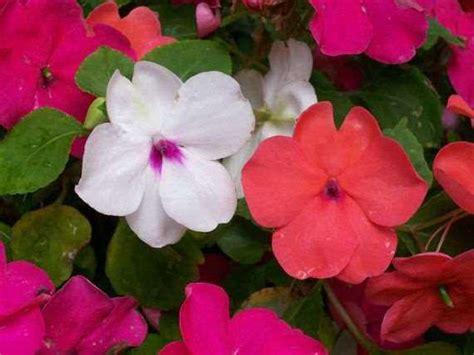 flores  zonas de sombra  media sombra