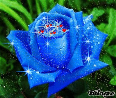rosas bellas fotograf 237 a 132157811 blingee com imagenes con flores azules dia de la maestra rosa azul