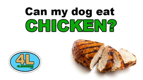 can puppies eat chicken can my eat chicken 4leggers