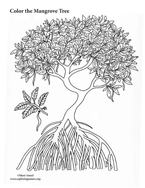 tree coloring page pdf mangrove tree coloring page