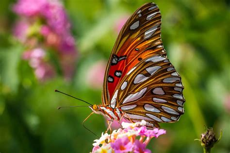 closeup mac wallpapers macro nature zoombackgrounds insectsbutterfly wallpaper