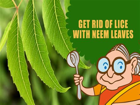 lice nits ayurvedic home remedies to get rid